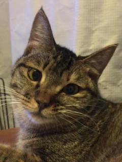 いちこ:保護猫のわ
