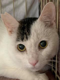 光太:保護猫のわ