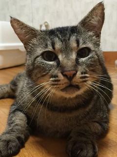じゅん:保護猫のわ