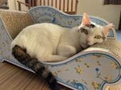 ふとん:保護猫のわ