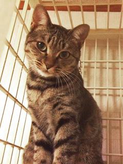 ストラ:保護猫のわ.jpg