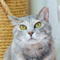 ハナ:保護猫のわ