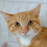 サラダ:保護猫のわ