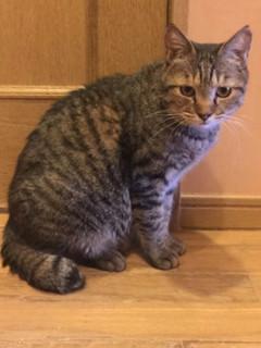 きじお:保護猫ドットコム