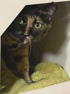 ひがたま:保護猫ドットコム