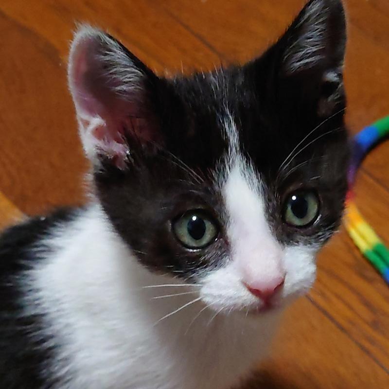バーディくん:保護猫のわ