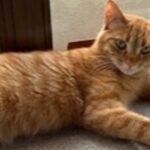 チビ:保護猫のわ