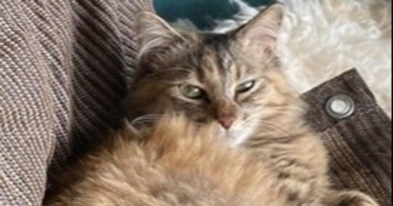 ムク:保護猫のわ