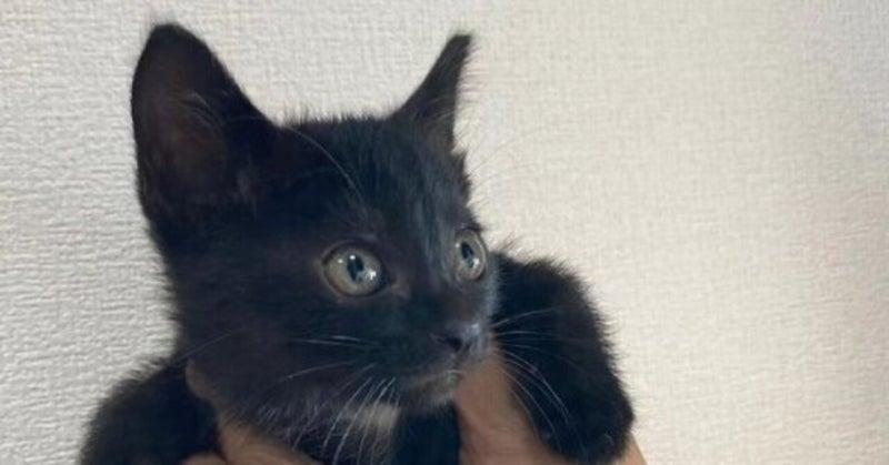 里親募集中の保護猫:ミッシェル