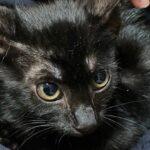 里親募集中の保護猫:ここ